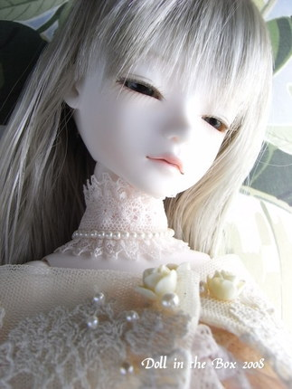 Daphne016