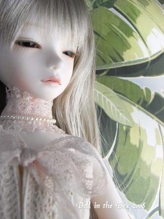 Daphne019
