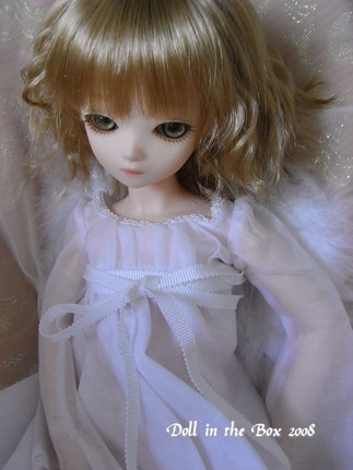 Olive052
